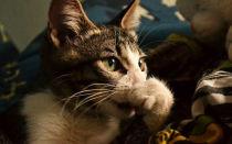 Какие запахи, отпугивающие кошек, чтоб не гадили и не метили