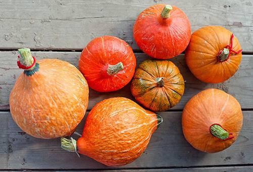 Как высушить тыкву для поделок или хеллоуина в домашних условиях