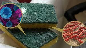 Губка для мытья посуды – источник инфекции: чего вы о ней не знали
