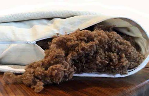Подушки из верблюжьей шерсти, плюсы и минусы, свойства наполнителя