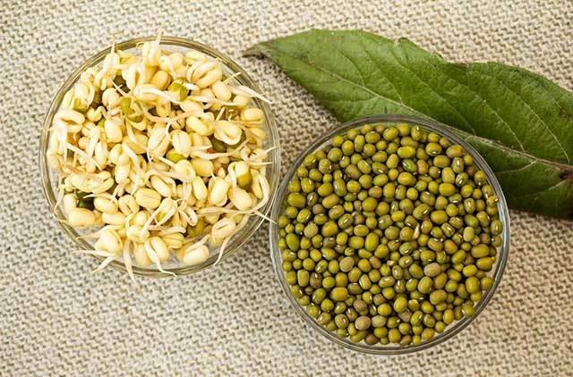 Как правильно прорастить маш в домашних условиях для еды, для салата: инструкция и советы