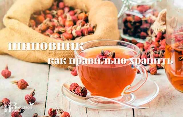 Как сушить шиповник в домашних условиях: сбор, подготовка и обработка ягод