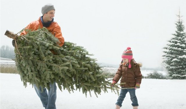 Как выбрать живую елку на Новый год: правильно оцениваем свежесть и внешний вид