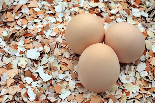 Почему нельзя выкидывать скорлупу от яиц и как ее использовать