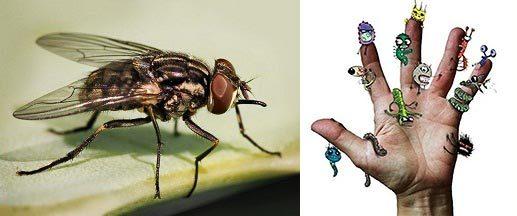 Как избавиться от мух быстро в домашних условиях – лучшие средства и способы