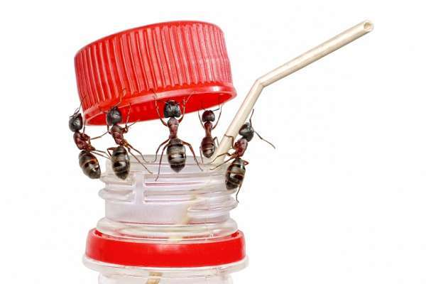 Как избавиться от муравьев в квартире в домашних условиях: эффективные средства