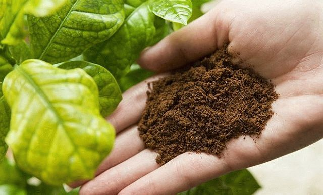 Кофе от неприятного запаха в обуви, и кофе вместо пестицидов для растений: плюсы и минусы