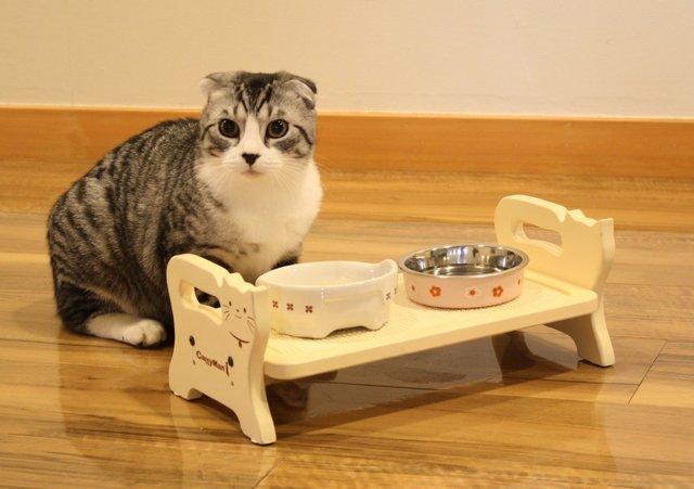 Как часто вы должны чистить миски вашего питомца – правила ухода за посудой для кошек и собак