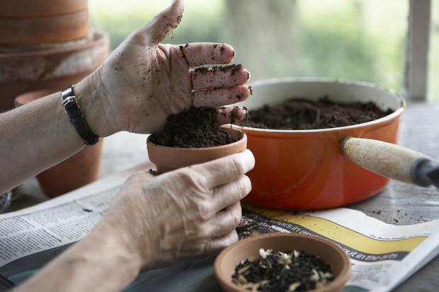 Фуксия: уход, размножение, пересадка, трудности выращивания