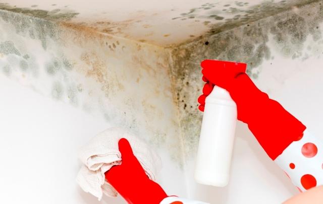 Плесень на стенах в квартире: как избавиться в домашних условиях от вредного грибка?