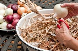 Как хранить лук в квартире, погребе и какой температуре