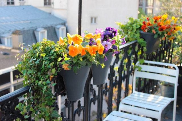 Какие цветы посадить на балконе, учитывая его расположение?