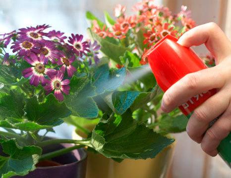 Как избавиться от мошки в комнатных цветах – химические препараты и народные средства