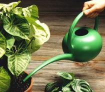 Как поливать комнатные растения во время цветения и покоя