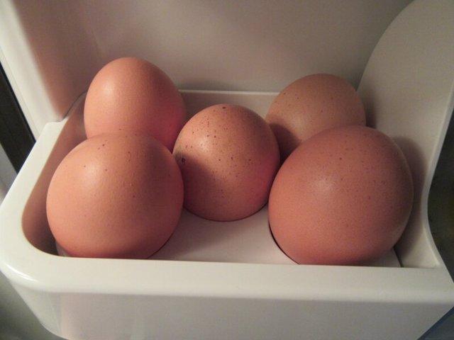Нужно ли мыть яйца перед варкой, хранением, закладкой в инкубатор, почему