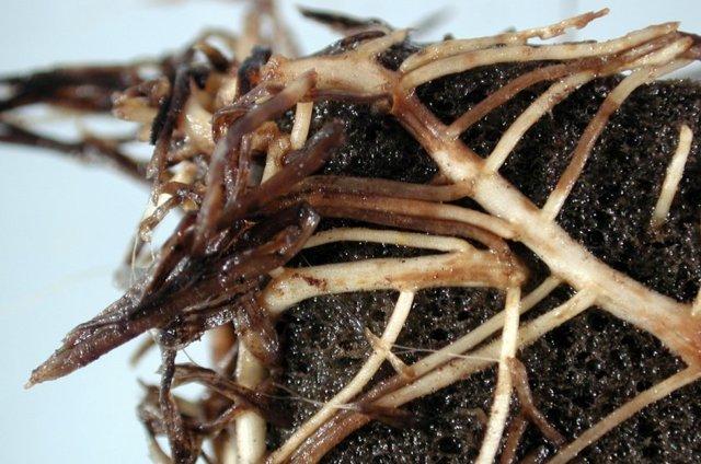 Молочай комнатный – уход и размножение в домашних условиях