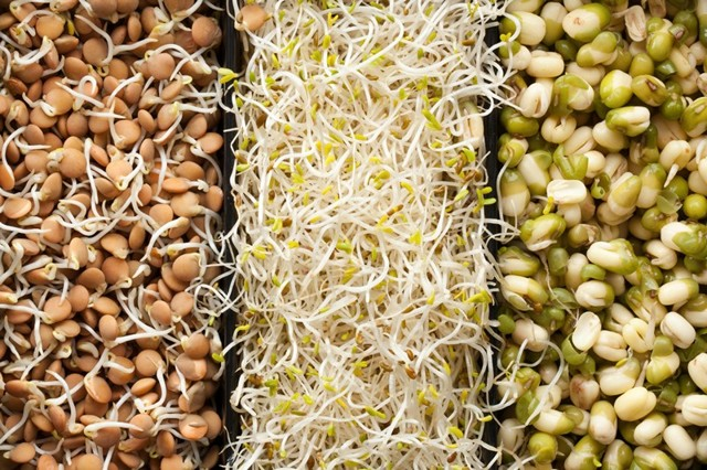 Как правильно и быстро прорастить пшеницу в домашних условиях для еды, как употреблять ростки