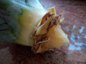 Как прорастить ананас из верхушки в домашних условиях, можно ли таким образом вырастить плод
