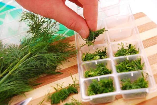 Как заморозить укроп на зиму в морозилке и в холодильнике – проверенные рецепты
