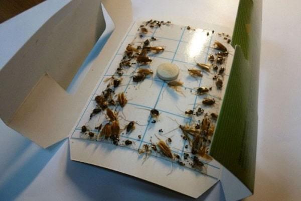 Как избавиться от тараканов в квартире раз и навсегда самостоятельно: лучшие промышленные и народные средства
