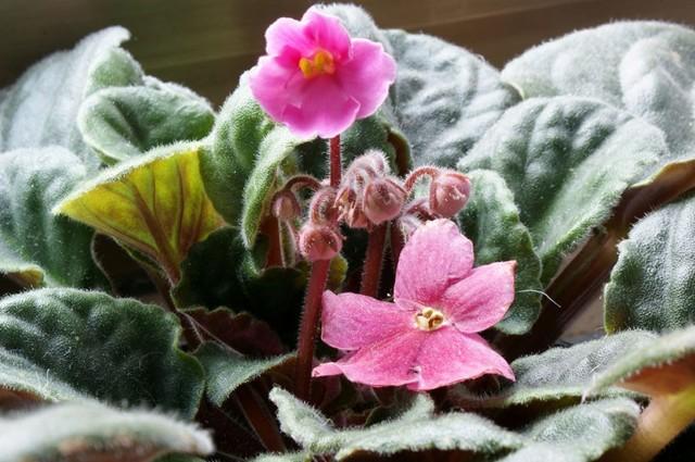 Как ухаживать за комнатными цветами зимой: необходимые советы