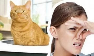 Как избавиться от неприятного запаха в квартире: выбираем действенное средство