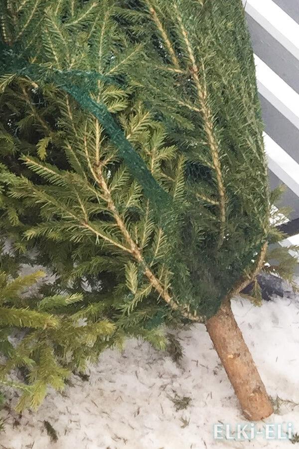 Как сделать, чтобы елка долго стояла и не осыпалась в квартире: какую выбрать ель или сосну, что добавить в воду?