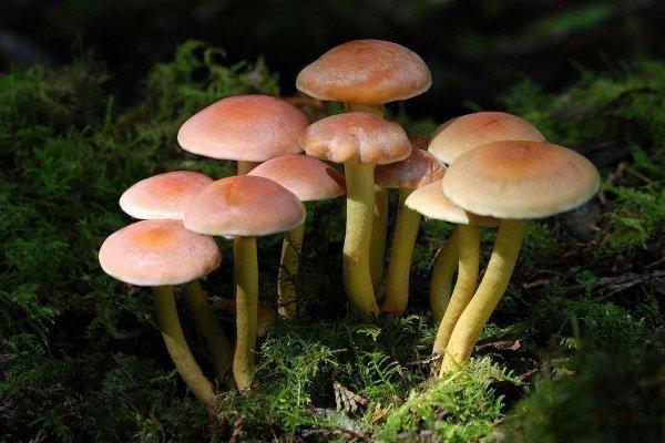 Как проверить грибы на съедобность: мифы и реальность