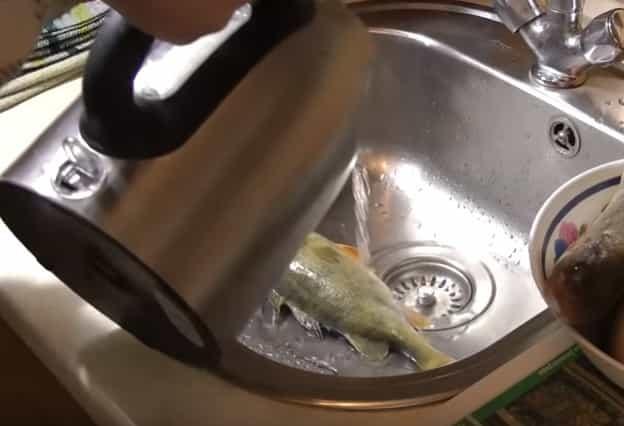 Как быстро почистить окуня от чешуи не поранив руки