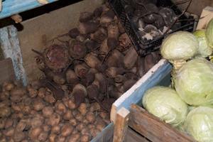 Как хранить свеклу в погребе, холодильнике и подвале?