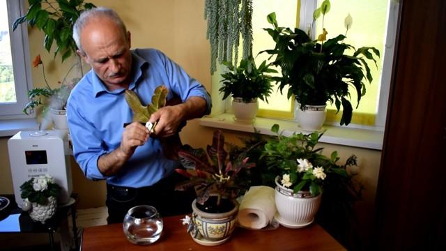 Кротон: уход в домашних условиях за растением?