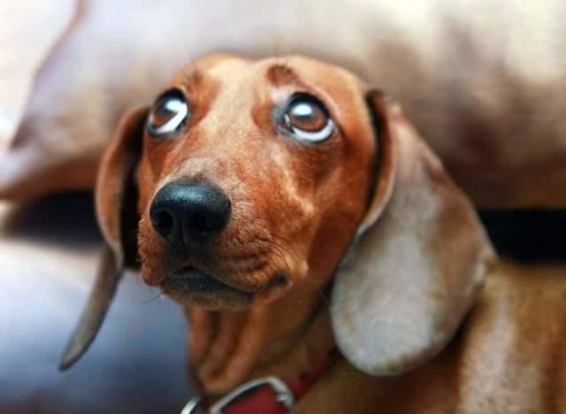 Запах, отпугивающий собак: лучшие средства и способы, почему собака гадит в квартире