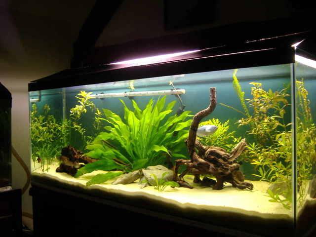Как почистить внутренний и внешний фильтр в аквариуме: порядок действий