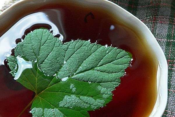 Разбираемся, когда собирать и как сушить листья смородины правильно