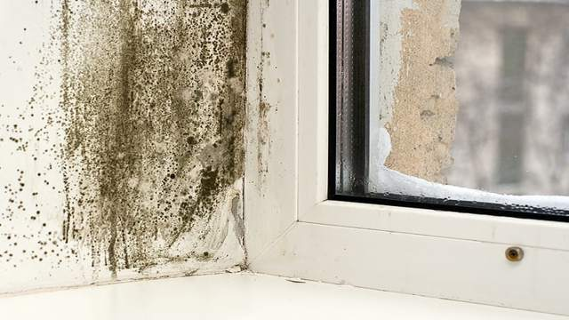 Плесень на пластиковых окнах и откосах: как избавиться от грибка навсегда?
