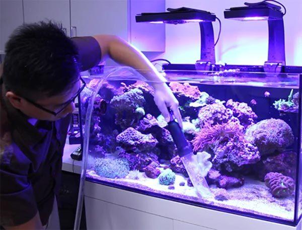 Как чистить аквариум с рыбками, не сливая воду, и как провести полную очистку?