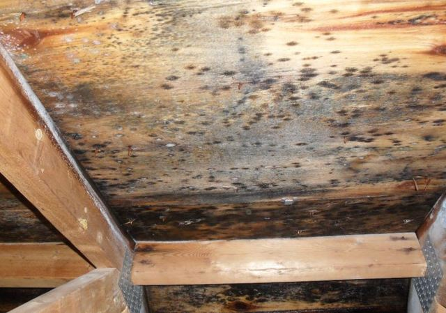 Белизна против грибка на стенах: правила применения средства