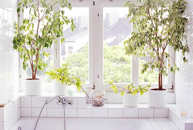 Полезные комнатные растения: какие цветы очищают воздух и убивают бактерии?