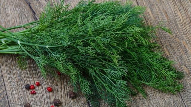 Как сушить укроп на зиму: когда собирать, как сохранить аромат, вкус и пользу