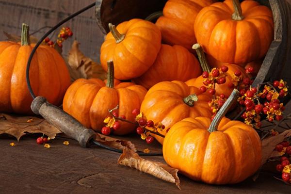 Как хранить тыкву: советы о сохранении урожая в частном доме и в квартире