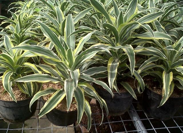 Растения, очищающие воздух в квартире: тип действия и правила ухода