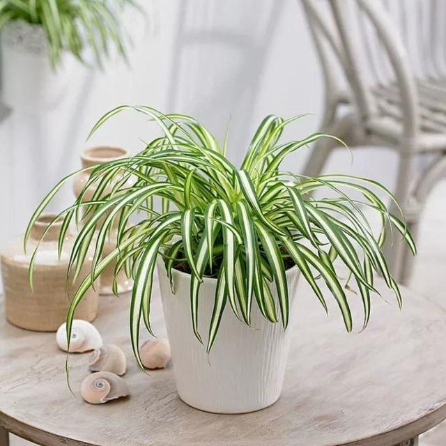 Растения для очистки воздуха в квартире: спасаемся от духоты большого города