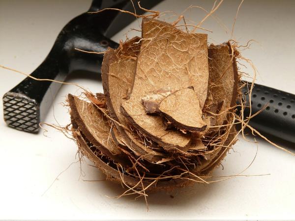 Как чистить кокос в домашних условиях с помощью подручных средств?