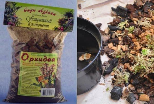 Как вырастить траву для кошек: в грунте, без грунта, где взять семена