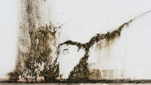 Как предотвратить появление плесени – 11 правил и подборка средств для обработки помещений