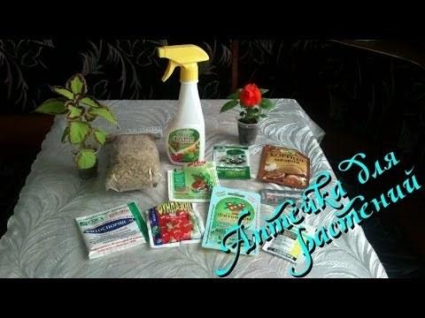 Вредители комнатных растений на листьях и в почве