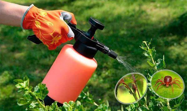 Можно ли поливать настоем луковой шелухи комнатные цветы, каким растениям противопоказана такая подкормка