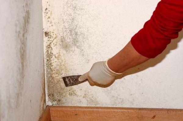 Чем обработать стены перед поклейкой обоев