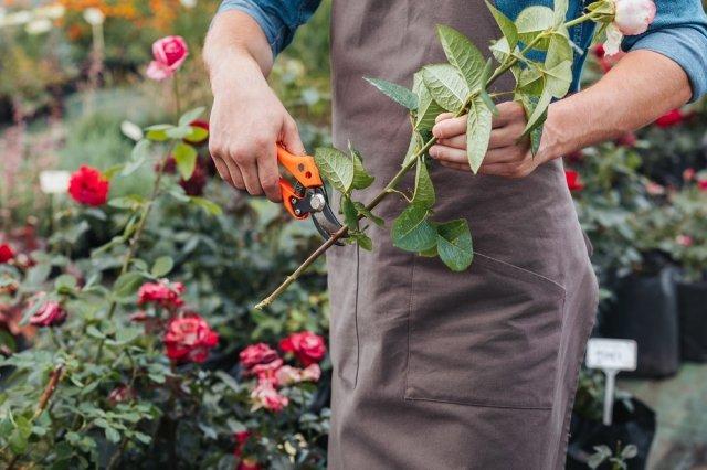 Что добавить в воду, чтобы розы дольше стояли: традиционные и необычные методики