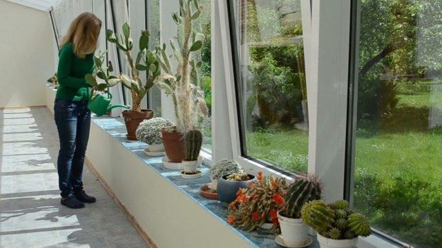 Суккуленты: уход в домашних условиях зимой и летом
